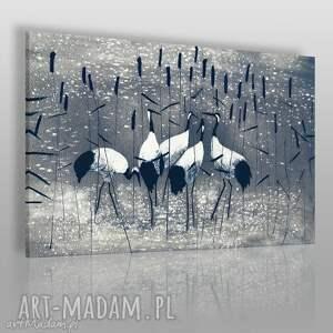 obraz na płótnie - żurawie wśród tataraku 120x80 cm 38202 , żurawie, ptaki, staw