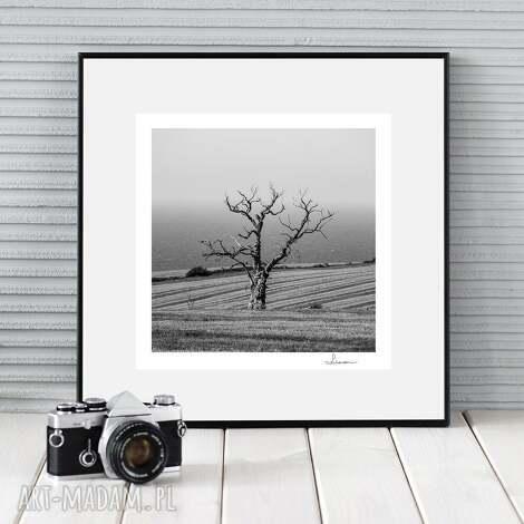 fotografie autorska fotografia, samotne drzewo, zdjęcie, prezent