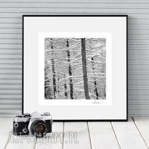 fotografie autorska fotografia, zimowe drzewa, zdjęcie, dekoracja, drzewa