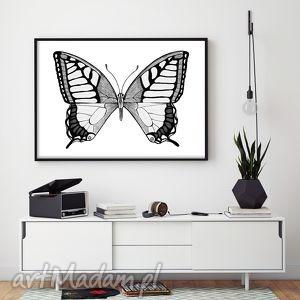 motyl a3, obrazek, ilustracja, plakat, motyl, motyle, motylek dom