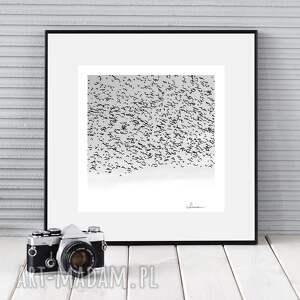 autorska fotografia, czarny śnieg, zdjęcie, dekoracja, ozdoba, ptaki